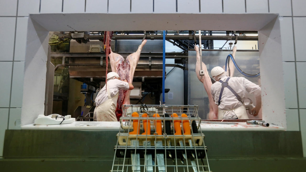 Butchers work in a slaughterhouse in Germany